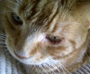 kitty's selfie