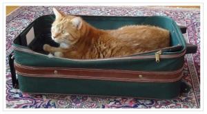 Cat in suitcase