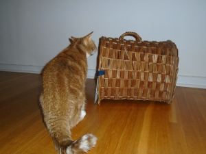 checking the cat basket