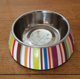 empty cat bowl