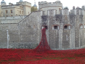 Tower of London, field of poppies