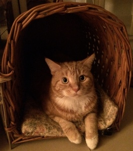 cat in travel basket
