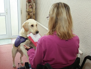 assistance dog with post