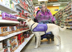 assistance dog shopping in supermarket