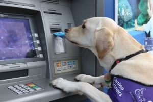 assistance dog using cash machine