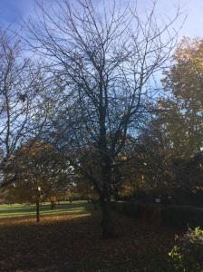 bare tree on Lammas Land