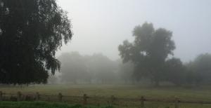 misty morning on Lammas Land
