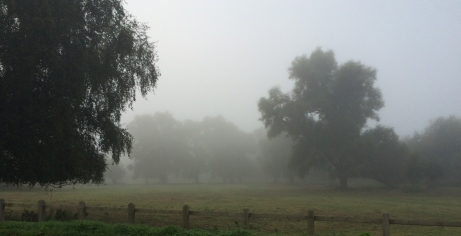 misty morning on Lammas Land